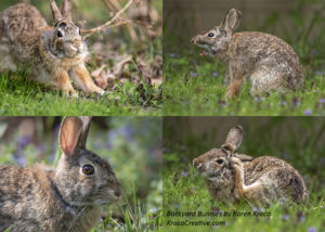 Four photos of rabbits in unusual poses