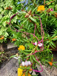Bumpy pink 3 beads on raspberry hemp necklace