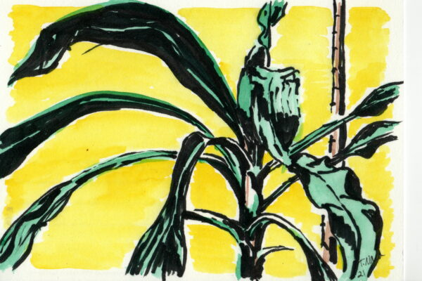 plant drawing with yellow background