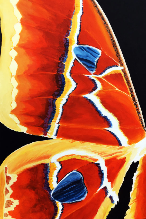 From Butterfly Series