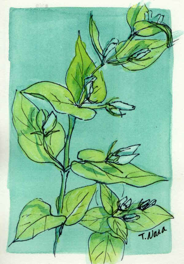 ink drawing of plant