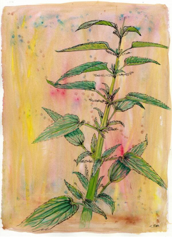painting of stinging nettle plant