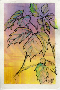 Black line drawing of leaves with purple yellow background and some colored pencil details