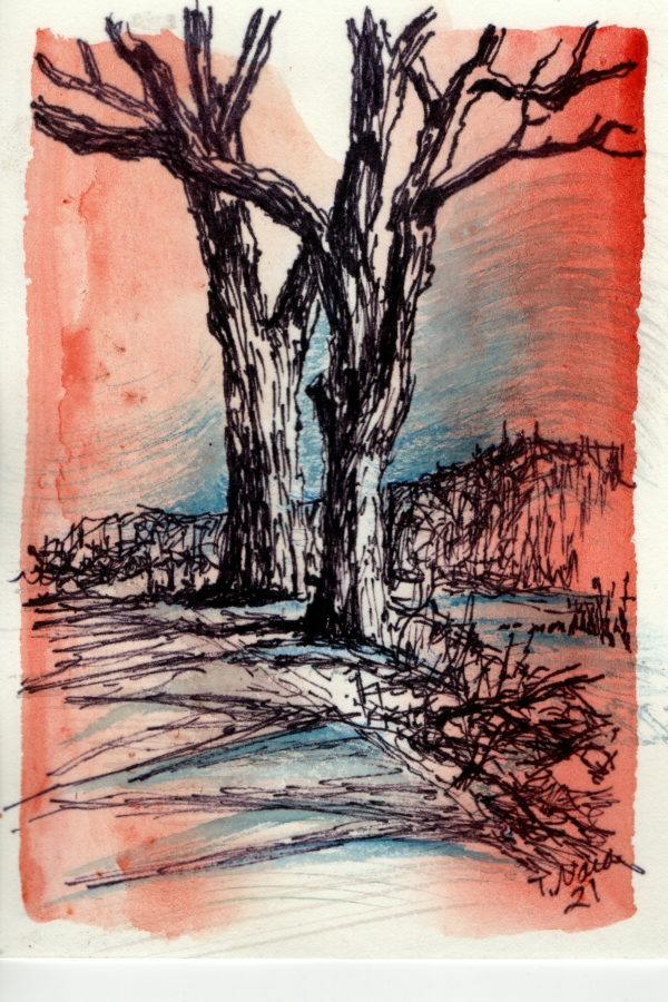 black line drawing of two trees on a light blue and red background