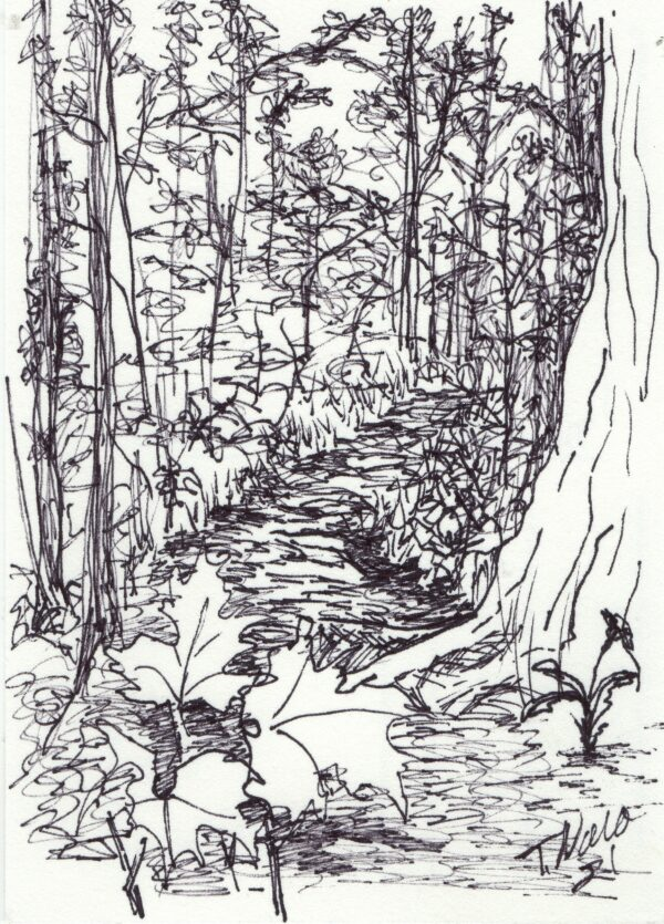 black line drawing of path in woods